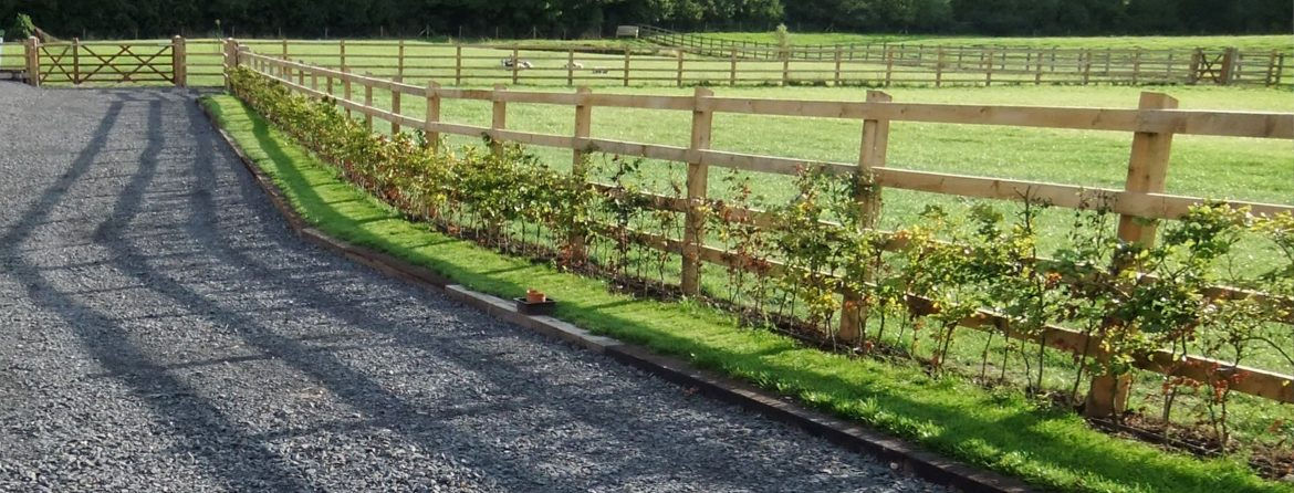 hedge 1170x446 - Turf & Hedgerow Laying